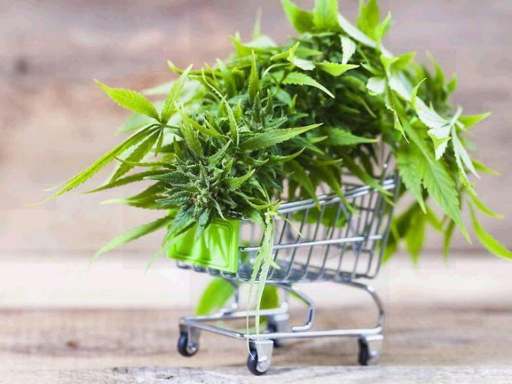 La cannabis legale Bari, Puglia, ruolo e funzione dell'e-commerce