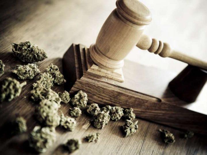 Il primo processo contro un commerciante di cannabis light si è concluso con l'assoluzione totale