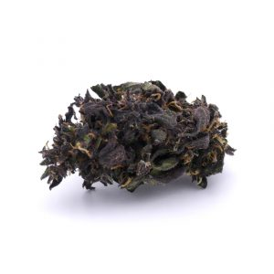 blackberrykush-bearbush