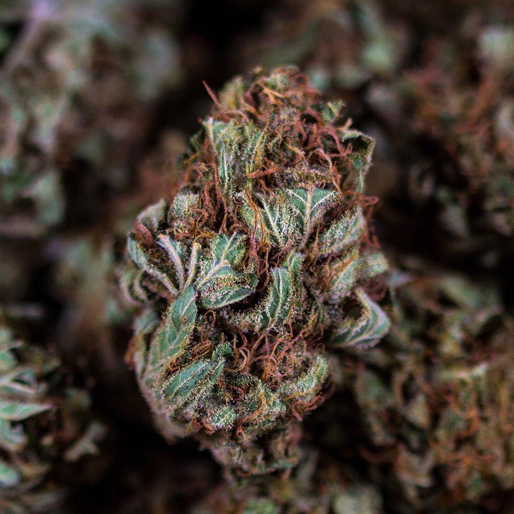 Pistilli colorati è un marchio di qualità per la cannabis legale