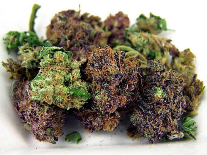 Сome riconoscere la cannabis light legale di altissima qualità. Guida completa