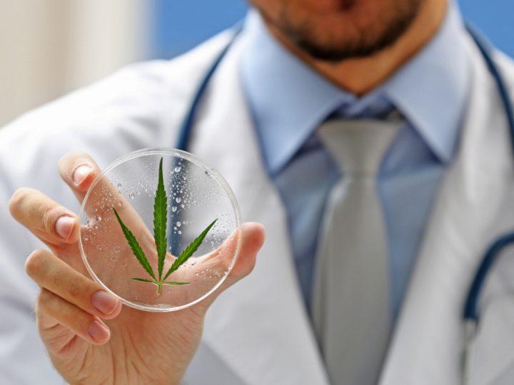 Come passare la quarantena del coronavirus covid-19 in compagnia della Cannabis