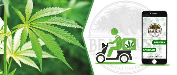 Spedizione Cannabis a domicilio anche nel periodo del covid-19 - Delivery Cannabis Legale