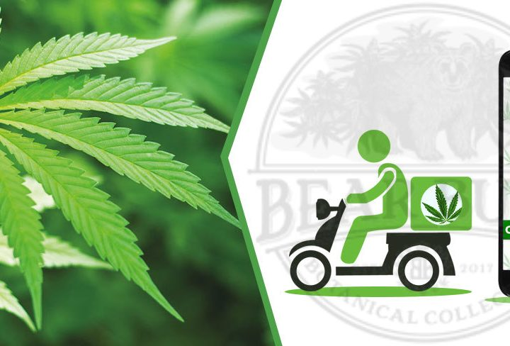 FAQ sul funzionamento delle spedizioni di Cannabis durante la pandemia COVID-19