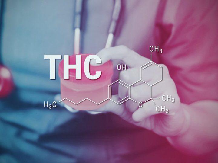 Guida Come Espellere il THC dall' Organismo in breve tempo