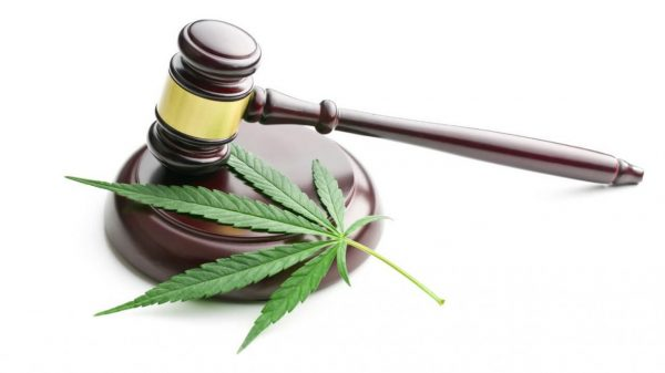 Legge Italiana sulla cannabis Marijuana