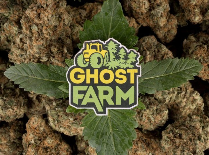 Ghost Farm, da Arezzo, la cannabis light di qualità. #ITALIANGROWITBETTER