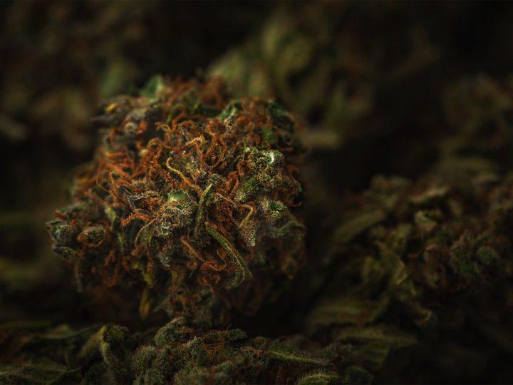 CENTOFUOCHI: qualità superiore. Un'eccellenza della cannabis light disponibile a Bari.