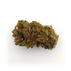 critical-lemon-2-ghost-farm-bear-bush-botanical-collective