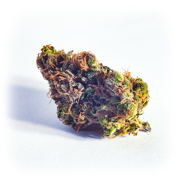 pink Cheese-cannabis-light-barbush