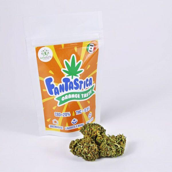 bellastoria-marijuana-light-fantastica-bearbush