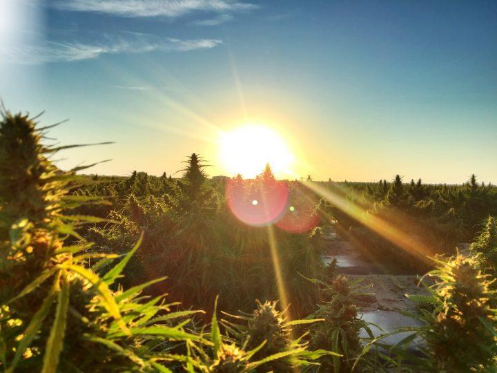 Legalizzazione: una nuova luce