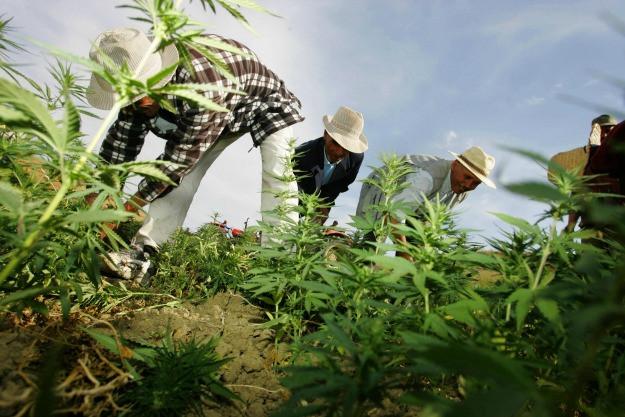 Legalizzazione nella Terra del Rif