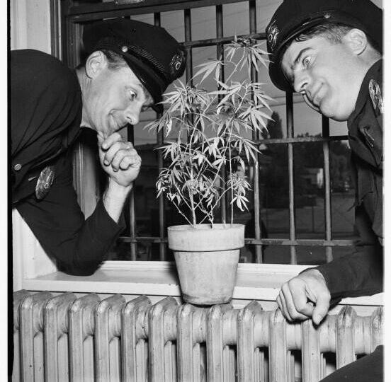 "La vera storia della parola ""Marijuana"""
