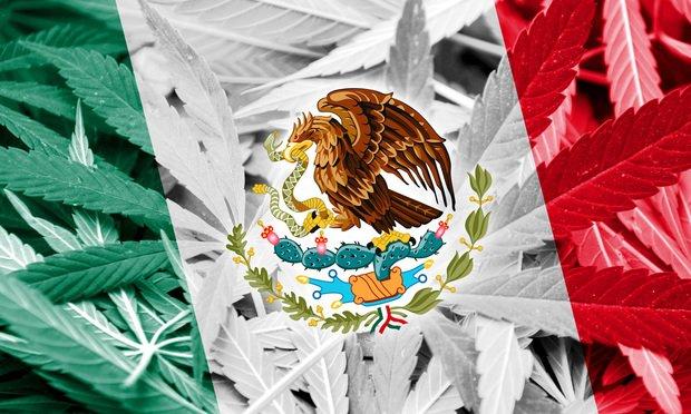 Messico: la guerra alla cannabis è incostituzionale!